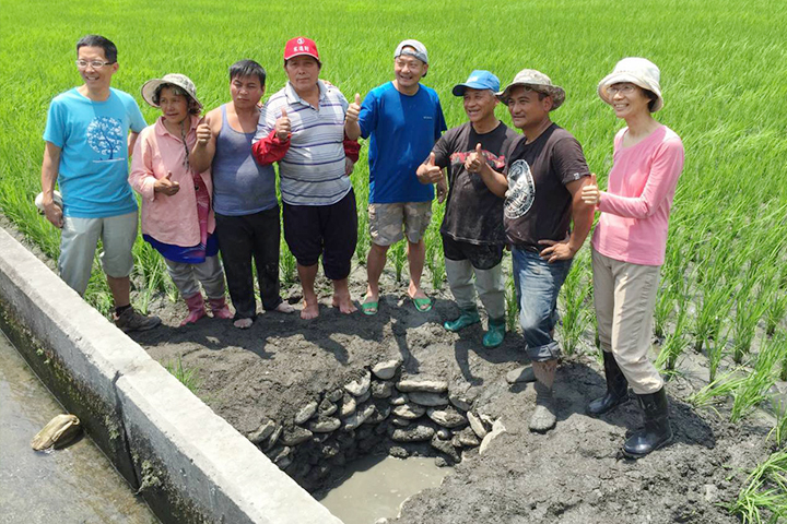 南安部落種植有機稻,以慈心盼回台灣原生鯽魚