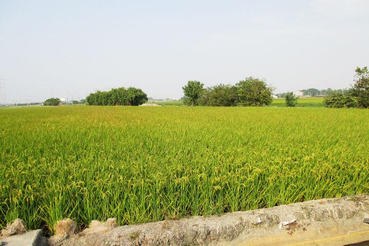 黃金廊道種樹,以實際行動支持有機農作