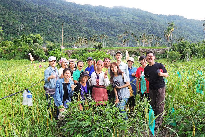 臺東達魯瑪克部落,農友帶領消費者走入小米田